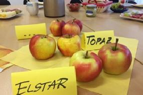 Obst, Obst, Obst zum Themenfrühstück im November